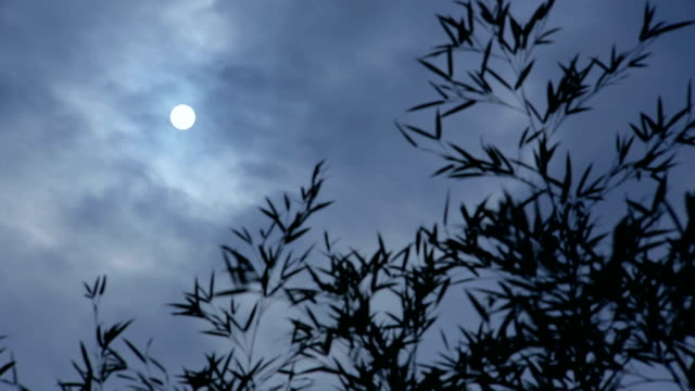 Moon and bamboo in night