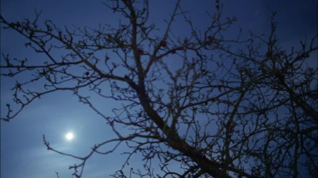 Moonlight illuminates the the sky at night.