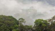Morning mist blowing through the rainforest canopy