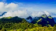Mattina di nebbia nella foresta pluviale