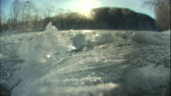 Morning sunlight illuminates frost frozen in the shape of flowers.
