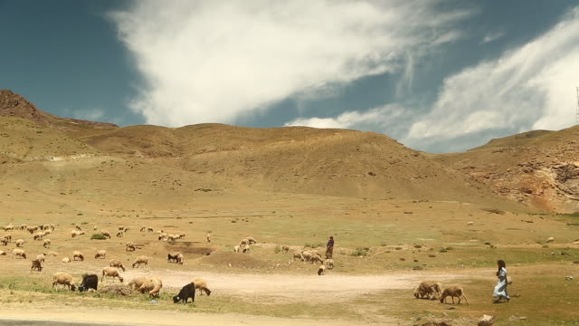 Moroccan tending Sheep near town on edge of Sahara