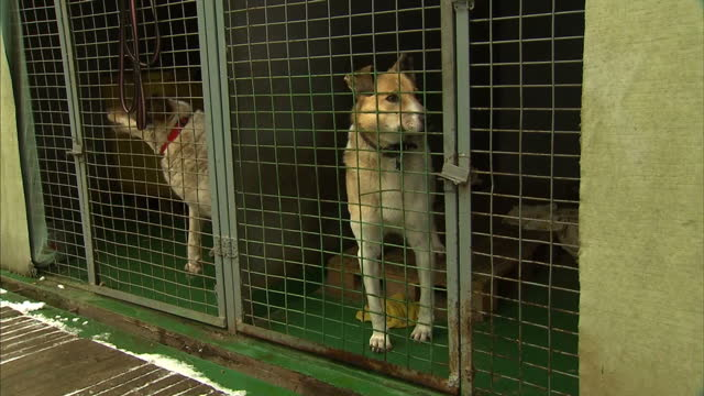 Moscow's government spent around 15 million pounds last year on tackling the city's stray animal problem but tens of thousands are still roaming the...