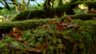 Moss and dead leaves on log by stream McKenzie River Valley Oregon 15