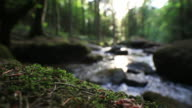Moss Bank And Forest Stream