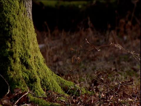 Moss growing on tree in woodland UK