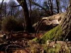 Moss grows on fallen tree in woodland.
