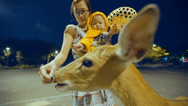 Mother and daughter feeding a deer at night