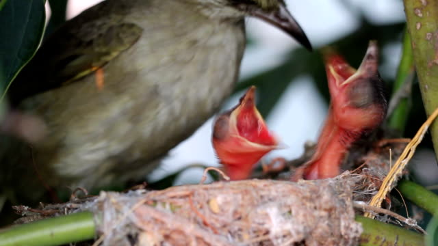 Mother bird Feeding food to new born