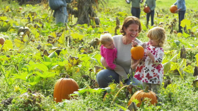 MS Mother carrying baby daughter (2 months) crouching by other daughter (2-3) on pumpkin patch, Manchester, Vermont, USA