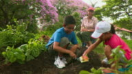 MS PAN Mother supervising son(8-9) and daughter (8-9) planting seeds in vegetable garden, Panama City, Panama