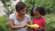 MS PAN TD Mother teaching young girl to harvest squash from vegetable garden / Richmond, Virginia