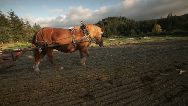 Mother with children working Organic Family farm with plow horse