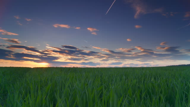 HD Motion Time-Lapse: Beautiful Sunset Over Field Of Wheat