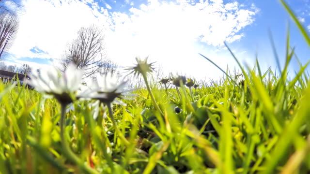 HD-Motion Zeitraffer: Wolkengebilde und Gänseblümchen im Gras
