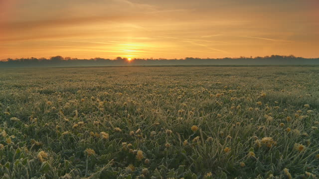 HD Motion Time-Lapse: Sunrise Over Field Of Dandelions
