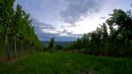 HD Motion Time-Lapse: Vineyard At Sunrise