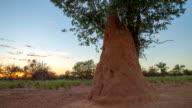 T/L Mound-Building Termite At Sunrise