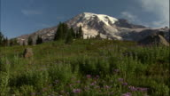 Mount Rainier rises behind evergreens and wildflowers.