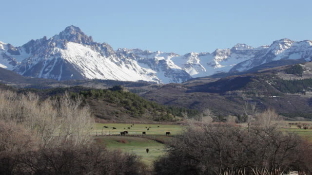 Mount Sneffels rises over ranch land and cattle herd Colorado