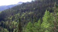 Mountain and  trees from Ski Gondola in Telluride