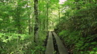 WS Mountain climbing trail through forest / Oze, Gunma, Japan