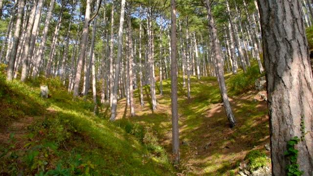 Berg Nadelwald