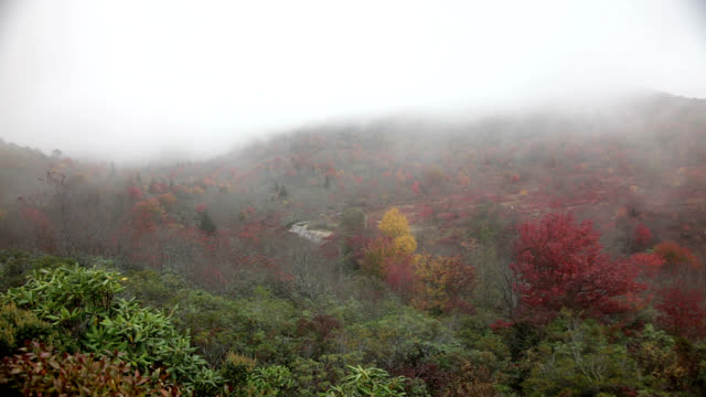 Mountain fog in Appalachians