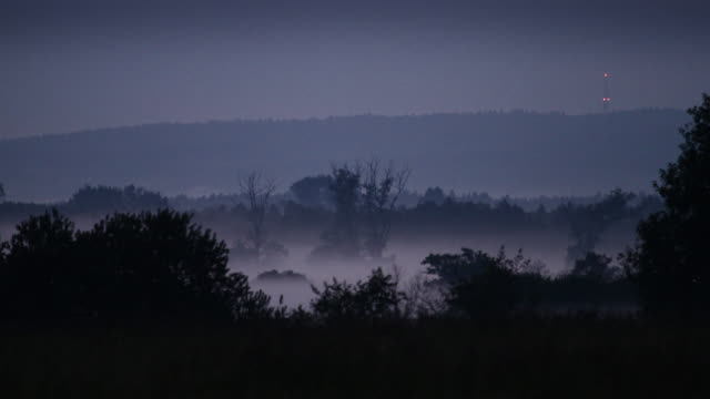 Mountain forest covered with fog. Mysterious landscape