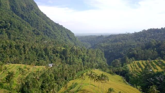 Mountain Rice Terrace North Bali Drone View