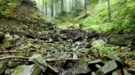 Mountain stream flowing through the gorge