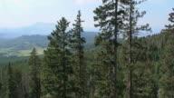 Mountain Trees Fly Through