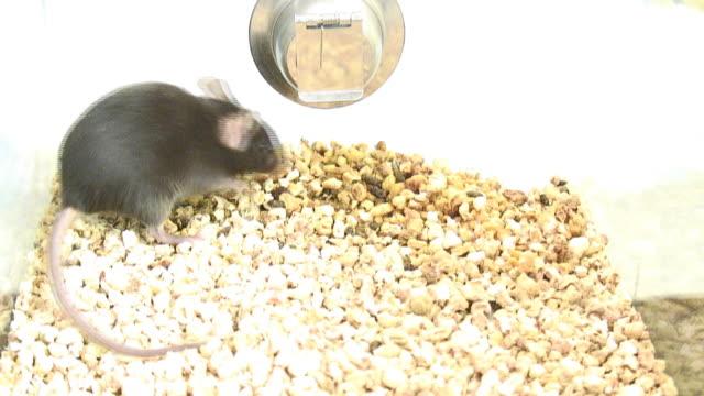 Mouse 4 - HD 1080/60i