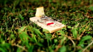 HD: Mousetrap On A Meadow