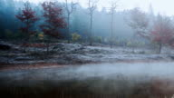move fog of autumn forest