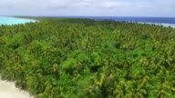 Moving forward over Coconut Palm forest blowing in strong wind