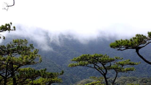 Bewegende Mist over bergen achter naaldboom