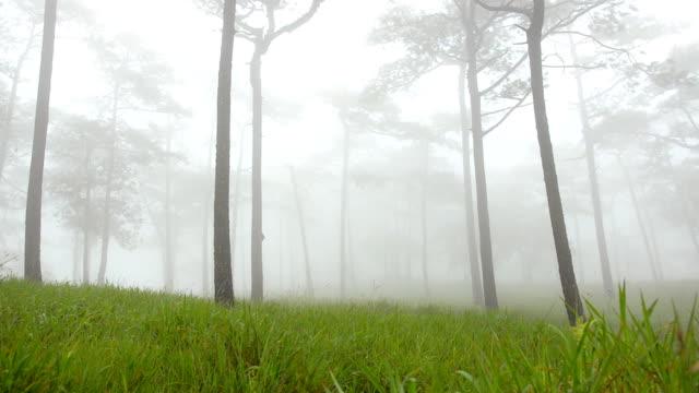 Bewegende Mist over bergen in Phu Soi Dao nationale Park.