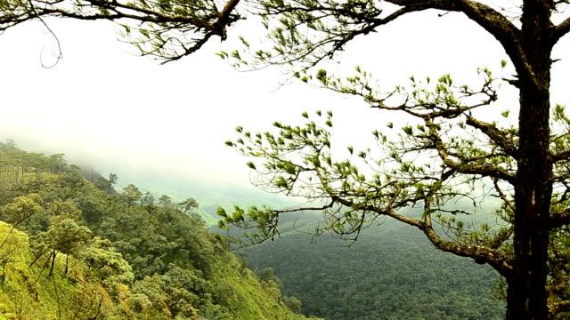 Bewegende Mist boven de piek van de berg