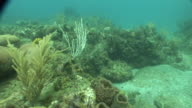 UNDERWATER HD *Moving over coral reef soft coral vegetation moving in tide small fish swimming at edge above reef murky water BG Ecosystem threatened...