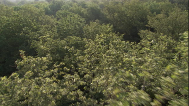 Moving slowly through the treetops of a deciduous forest. Available in HD.