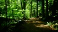 GIMBAL bewegen über Wald mit Creek (4 k UHD zu/HD)
