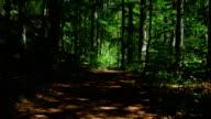 GIMBAL, die durch den Wald (4 k UHD zu/HD)