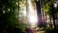 GIMBAL Moving Through Sunny Spring Forest (4K/UHD to HD)