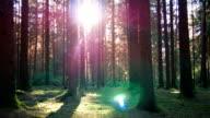 GIMBAL passare attraverso giornata di primavera e foresta (4 k UHD e HD