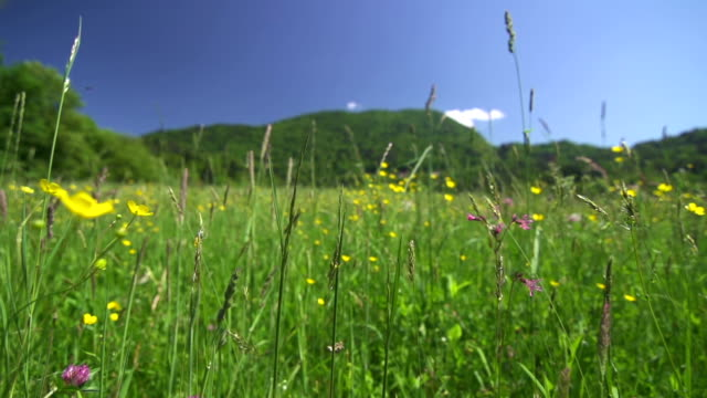 Moving through tall grass
