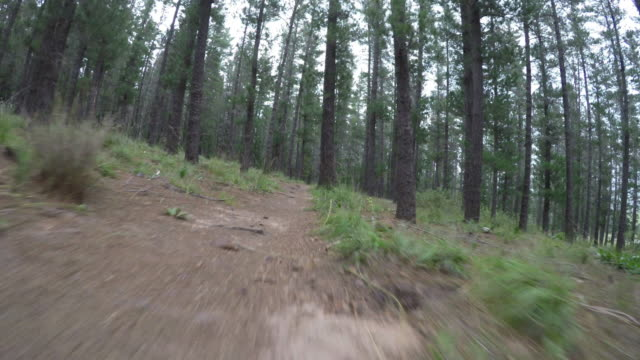POV - moving through the forest