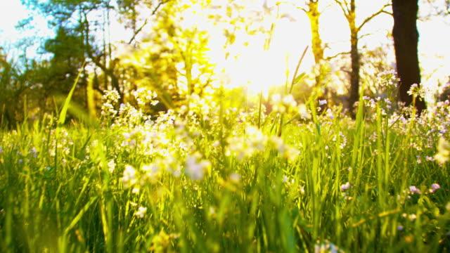 SLO MO Moving through the grass