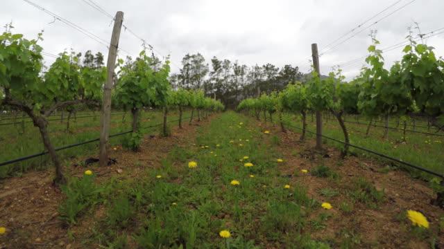 POV - moving through the vineyards