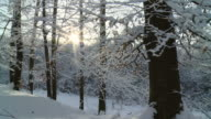 HD SLOW MOTION: Moving Through Winter Forest